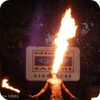 Free Travel Videos: Singapore Night Safari