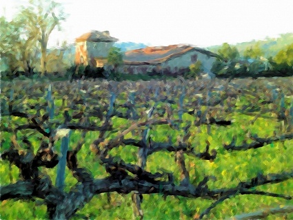 Click to see more about the Napa Valley Wine Tour!