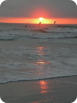 Florida Beach Vacations