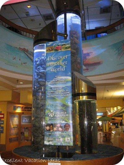 St Petersburg Florida Attractions Aquarium