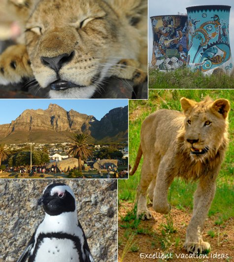 Vacation in South Africa collage