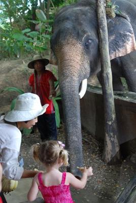 Feeding Elephants in Chiang Mai